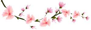 kisspng-cherry-blossom-flower-clip-art-sakura-branch-5b08a7bc98c8e4.1354952215272938846258-1-300x99.jpg