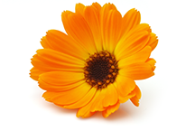 content-img-flower-1.png