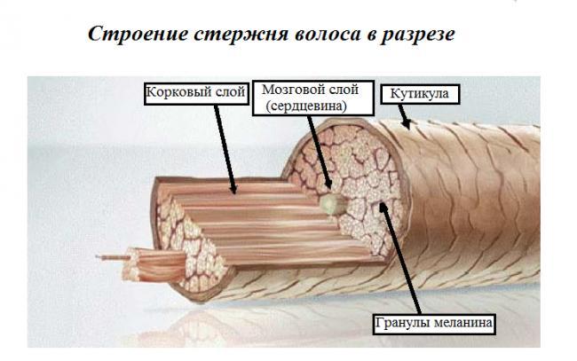 poristye-volosy-chto-delat-kak-lechit-i-uxazhivat1.png